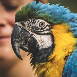 macaw-face-px-ara-3695678